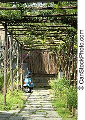Blue Scooter in Italy - A blue scooter parked under grape...