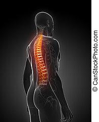 backache illustration - 3d rendered illustration of a...