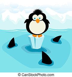 Penguin - Little penguin and three sharks