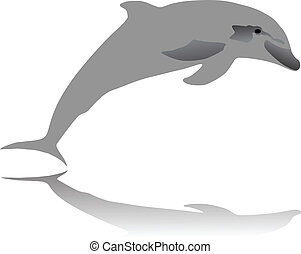 dolphin jumping vector