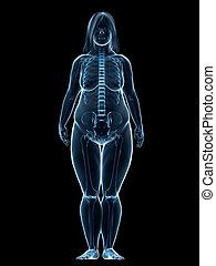 overweight female - anatomy
