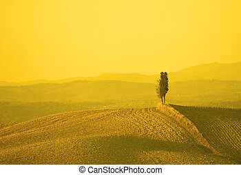 tuscan landscape in yellow sunset light