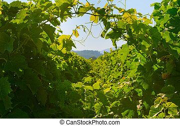 fundo, verde, uva, folhas