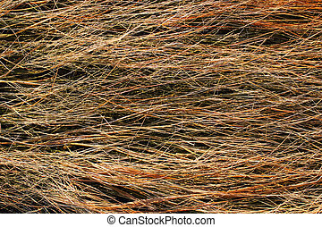 Dried salt marsh sea grass - Close view of the dried salt...