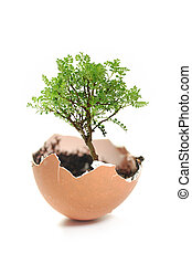 Tree growing from egg