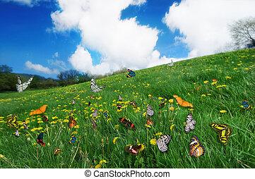 butterflies in a dandelion meadow.