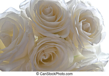 Clouse-up of white roses on a white background blur