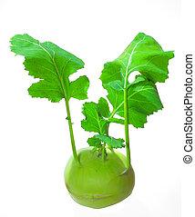 kohlrabi - fresh green kohlrabi isolated in white