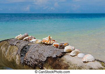 shells on a palm tree, perfect holiday background