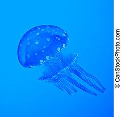 藍色, 水母
