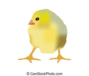 Chickens - Small yellow chicken on a white background