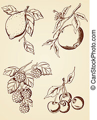 hand drawn berries and fruits - set of vector hand drawn...