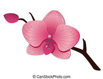 Beautiful pink Orchid over white. EPS 8, AI, JPEG