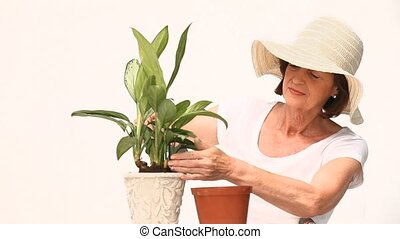 Mature woman doing some gardening against a white background