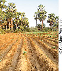 Rural agricultural field of South East Asia
