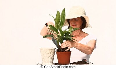 Elderly woman doing some gardening against a white...
