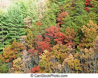 Trees in the fall