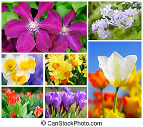 Colorful set of 7 flower shots - Collage containing 7 very...