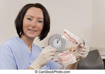 dentist - a dentist with a teeth model