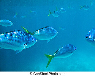 Swimming Fish - Fish swimming around in the ocean