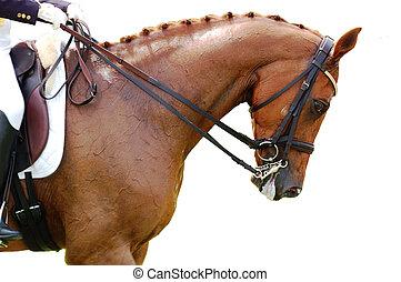 Equestrian - Dressage Horse - A closeup shot of dressage...