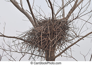 bird nest 2 - A blue raven built this nest for her baby this...