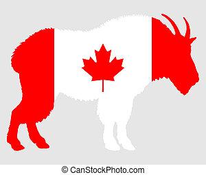 Mountain goat Canada
