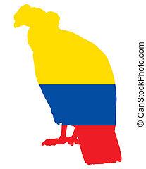 andino, condor, Ecuador