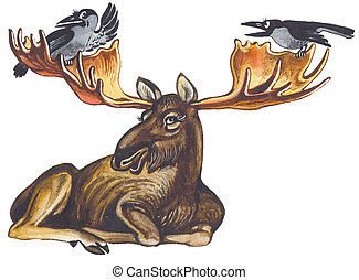 Elk or moose - The elk moose the greatest deer in the World...