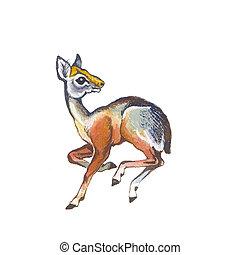 Dik-dik (pygmy antelope). Hand drawing watercolor.