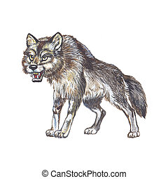 Gray wolf or grey wolf Canis lupus