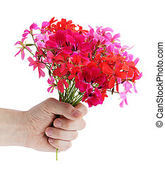 geranium - Bouquet of the pink colors of geranium in the...