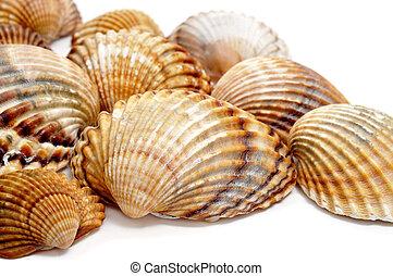 seashells - a pile of seashells isolated on a white...