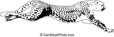 Gepard vector illustration
