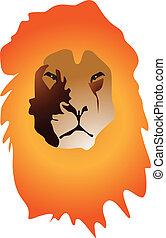lion color portrait