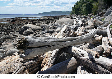 Driftwood on beach - Piles of driftwood on beach in Maine