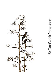 Two birds on white background - Two birds on branches of a...