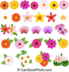 Beautiful Flowers - Collection Beautiful Flowers, Isolated...