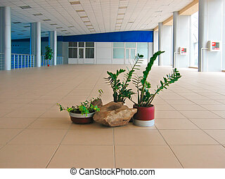 Flowers in public entrance hall