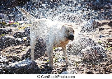 cão, jogo, água