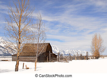 Mouton, grange, Parc,  national,  teton