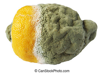 podre, limão, branca, fundo