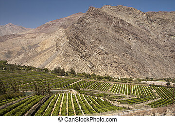 Elqui valley, Chile - fertile valley in inhospitable...
