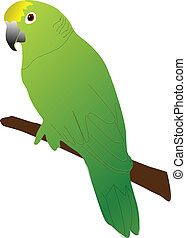 green parrot color vector illustration