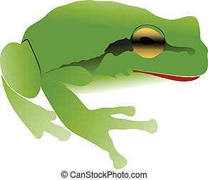 European tree frog vector