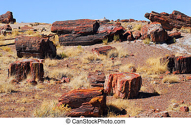 Petrified Forest - View of petrified logs found in the...