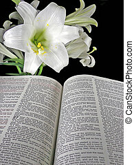 Easter Story - Easter lily with Holy Bible.