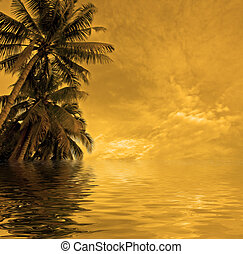 sunset beach - background of palms and sky