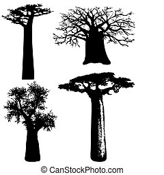 trees of Africa - vector - various African trees - vector