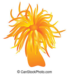 vector - orange sea anemone - Illustration of the sea...